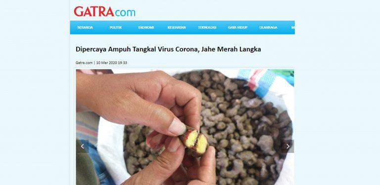 Jahe Merah Dipercaya Menangkal Virus Corona